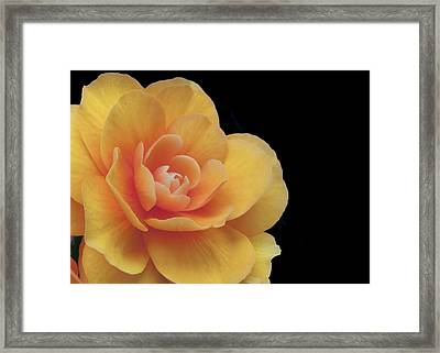 Framed Print featuring the photograph The Dahlia by MaryJane Armstrong