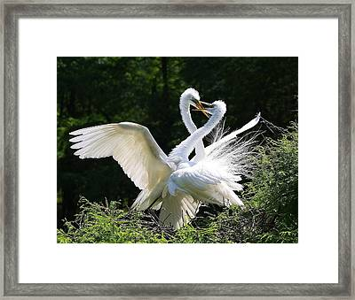 The Dance Framed Print by Paulette Thomas
