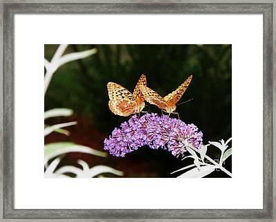 The Dancing Butterflies Framed Print