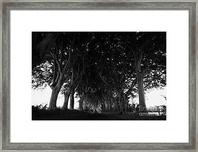 The Dark Hedges Old Avenue Of Beech Trees Which Have Overgrown The Road Armoy County Antrim Ireland Framed Print by Joe Fox