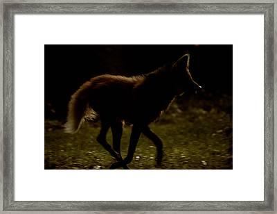 The Dark Side Framed Print by Karol Livote