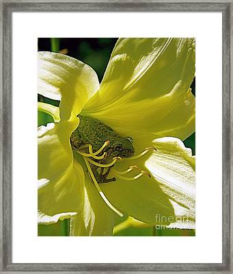 The Day Lily Met Her Prince Framed Print by Sue Stefanowicz