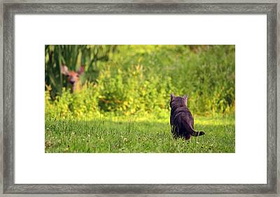 The Deer Hunter Framed Print by Lori Tambakis