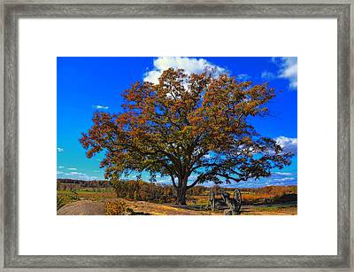 The Devils Den Witness Tree. Framed Print by Dave Sandt