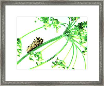 The Dill Express Framed Print
