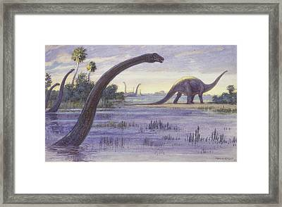 The Diplodocus Could Grow Framed Print by Charles R. Knight