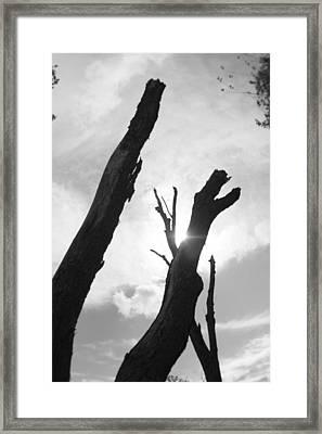 The Dragon Tree Framed Print by Artist Orange