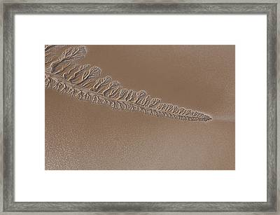 The Dry Colorado River Delta Stands Framed Print by Pete Mcbride
