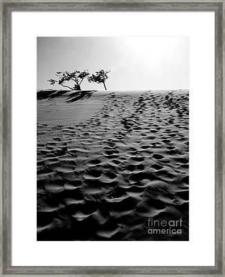 The Dunes At Dusk Framed Print by Tara Turner