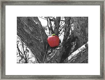The Early Worm Gets The Apple Framed Print by Paul Louis Mosley