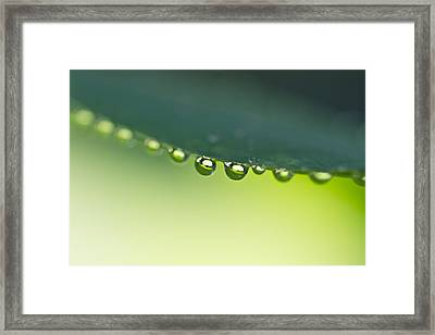 Framed Print featuring the photograph The Edge I by Priya Ghose