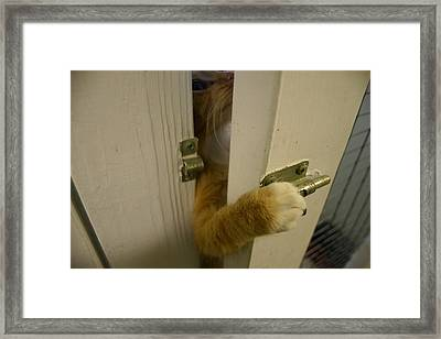 The Escape Artist Framed Print by Nina Fosdick
