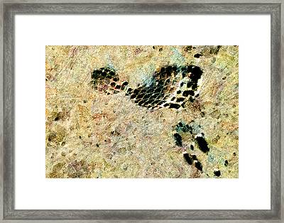 Framed Print featuring the digital art The Evolution Of Man by Steve Taylor