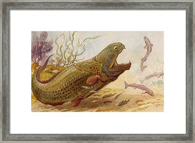 The Extinct Dinichthys Fish Could Grow Framed Print by Charles R. Knight