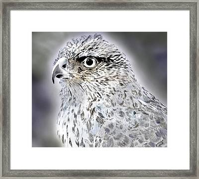 The Eye Of An Eagle  Framed Print by Yvonne Scott