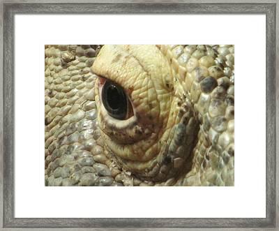 The Eye Of The Dragon Framed Print