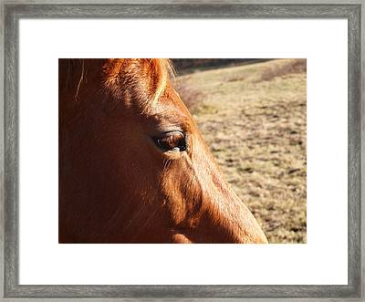 The Eye Of The Horse Framed Print by Robert Margetts