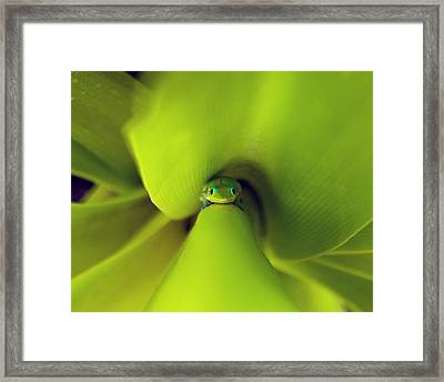 The Eyes Have It Framed Print by Brian Governale