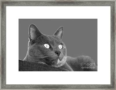 The Eyes Have It Framed Print by Nareeta Martin