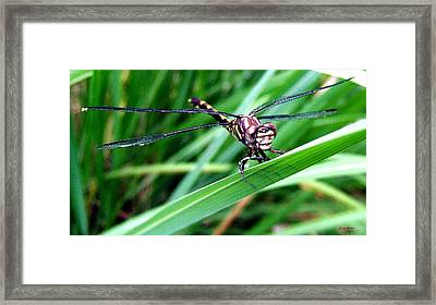 Framed Print featuring the photograph The Face Of A Dragonfly 02 by George Bostian