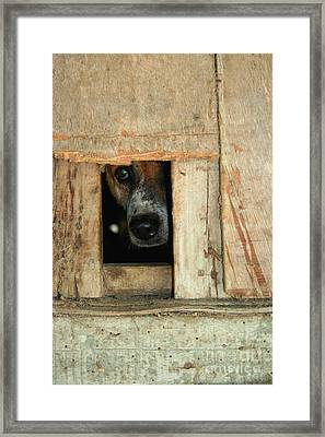Framed Print featuring the photograph The Face Of Hoarding by Nola Lee Kelsey
