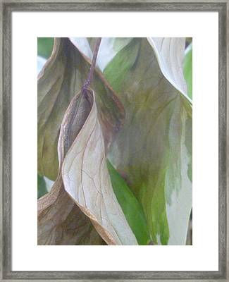 The Fade Framed Print