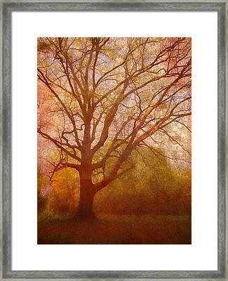 The Fairy Tree Framed Print by Brett Pfister