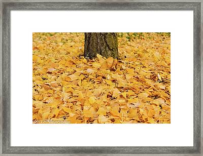 Framed Print featuring the photograph The Fall Of Ginkgo by Rachel Cohen