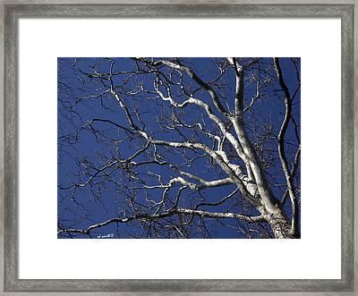 The Family Tree Framed Print by Ed Smith