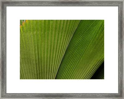 The Fan Framed Print by MaryJane Armstrong