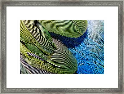 The Feathers Of A Red-winged Parrot Framed Print by Jason Edwards