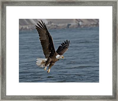 The Few   - The Proud Framed Print by Michael Rucci