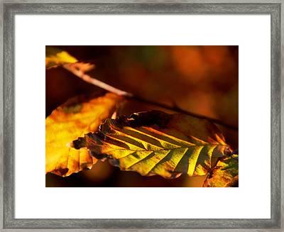 The Fires Of Autumn Framed Print by Odd Jeppesen