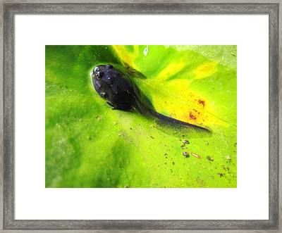 The First Breath Of Air Framed Print by Catherine Natalia  Roche