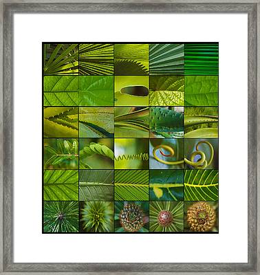 The First Sign Of Spring Framed Print