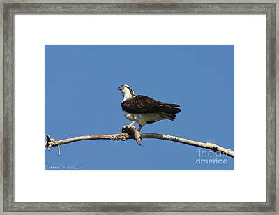 Framed Print featuring the photograph The Fisherman by Mitch Shindelbower