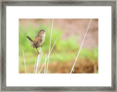 Framed Print featuring the photograph The Five Flies by I'ina Van Lawick