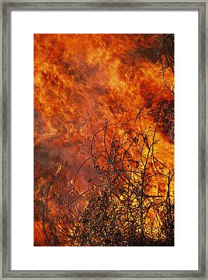 The Flames Of A Controlled Fire Framed Print by Joel Sartore