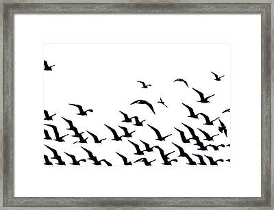 The Flock Framed Print by Bill Cannon