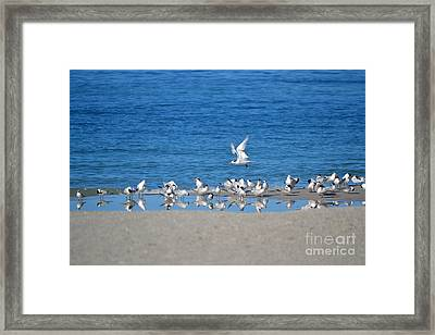 The Flock Framed Print by Brenda Alcorn