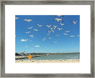 The Flock Framed Print