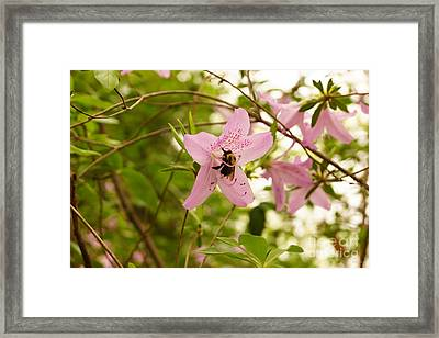 The Flower And The Bumble Bee Framed Print