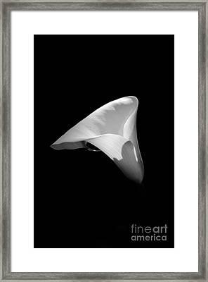 The Flower Framed Print by Armando Carlos Ferreira Palhau