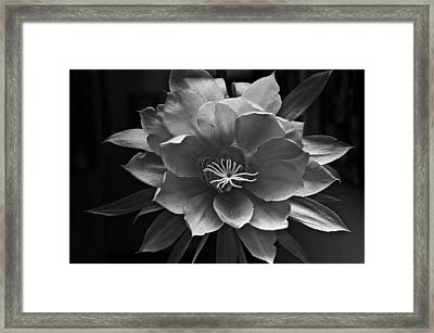 The Flower Of One Night Framed Print by Tom Bell