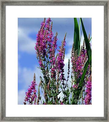 The Flowers Praise Him Framed Print by Kathleen Struckle