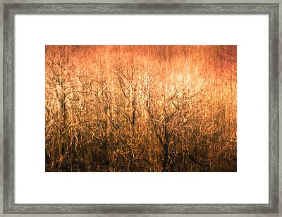The Forest Fire Framed Print by Justin Albrecht