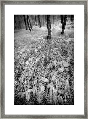 The Forest Floor Framed Print by Dan Carmichael