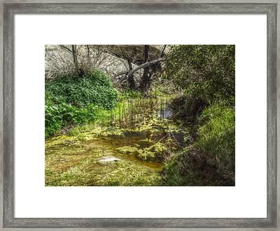 The Frog Pond Framed Print by Cindy Nunn