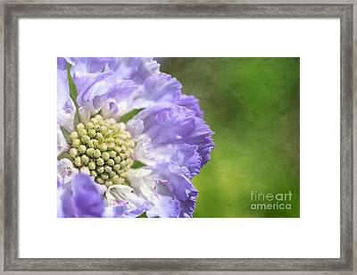 The Garden Girl Framed Print by Beve Brown-Clark Photography