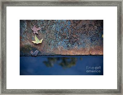 The Garden Pond Framed Print by Steven Gray